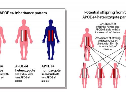 How is the Alzheimer's Disease APOE Gene Inherited?